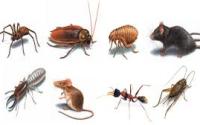 Pest Control Business SEQ Area.SOLD.