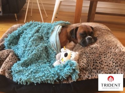 Pet Accessory business - Bacchus Marsh New listing