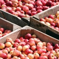 Freehold Fruit Orchard and residence.South East Queensland. New Listing.